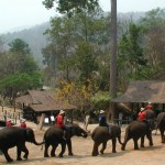 Ban Kwan Elephant Camp - Koh Chang